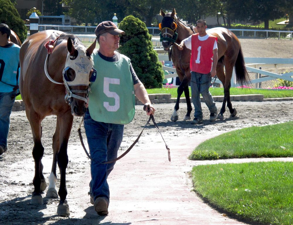 Horses were warmed up around the walking ring at Suffolk Downs on September 17, 2014. It was the first day of horse racing after the Massachusetts Gaming Commission dealt a blow to the 79-year-old thoroughbred track by not approving a casino proposal in Revere.(Zeninjor Enwemeka/WBUR)