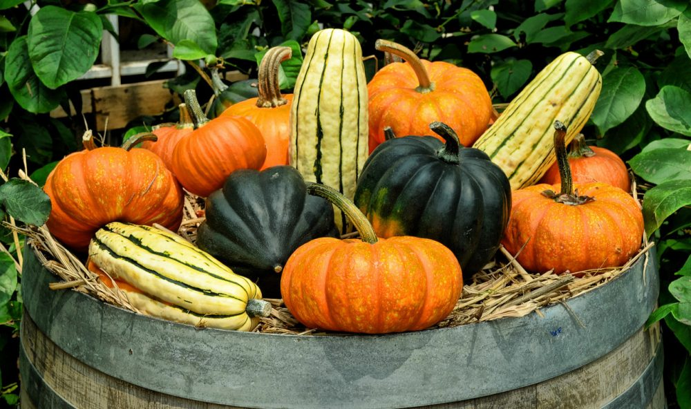 'Tis the season for winter squash. Kathy Gunst has a number of recipes and tips and a guide for tasting and selecting squash. (Choo Yug Shing/Flickr)