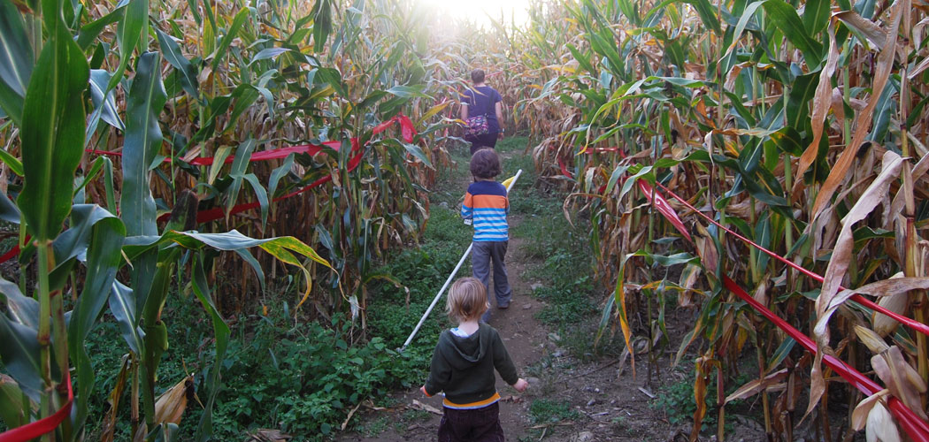 Marini Farm's corn maze in Ipswich. (Greg Cook)