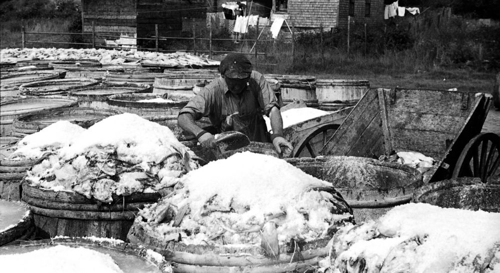 Janna Malamud Smith: To save the Atlantic cod, if it's not already too late, we will need to make good decisions rather soon. Pictured: In 1936, codfish are salted before drying in Vinalhaven, Maine. (rich701/flickr)