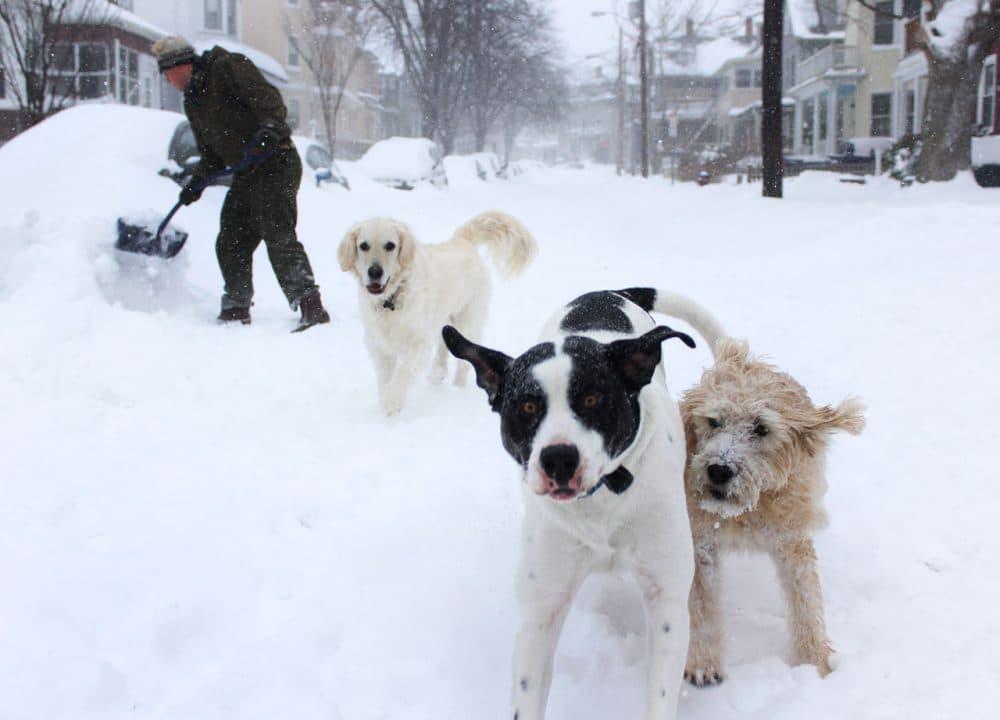 Somerville dogs enjoy the snow. (Jesse Costa/WBUR)