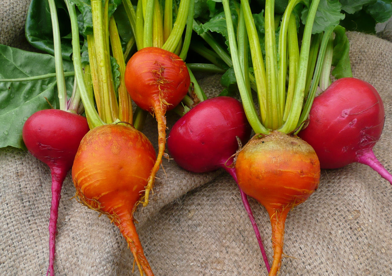 Red and orange beets are a nutrient dense ingredient