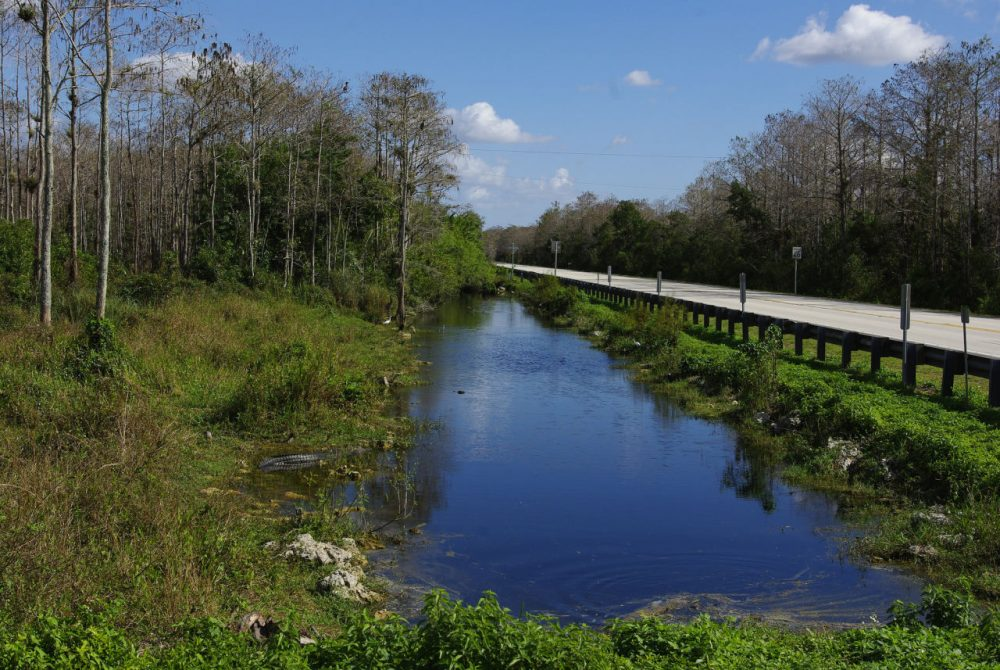 The Tamiami Trail runs from Napes to Miami, Florida, through the Everglades. A proposed bike path along the highway is drawing protests. (schimonski/Flickr)
