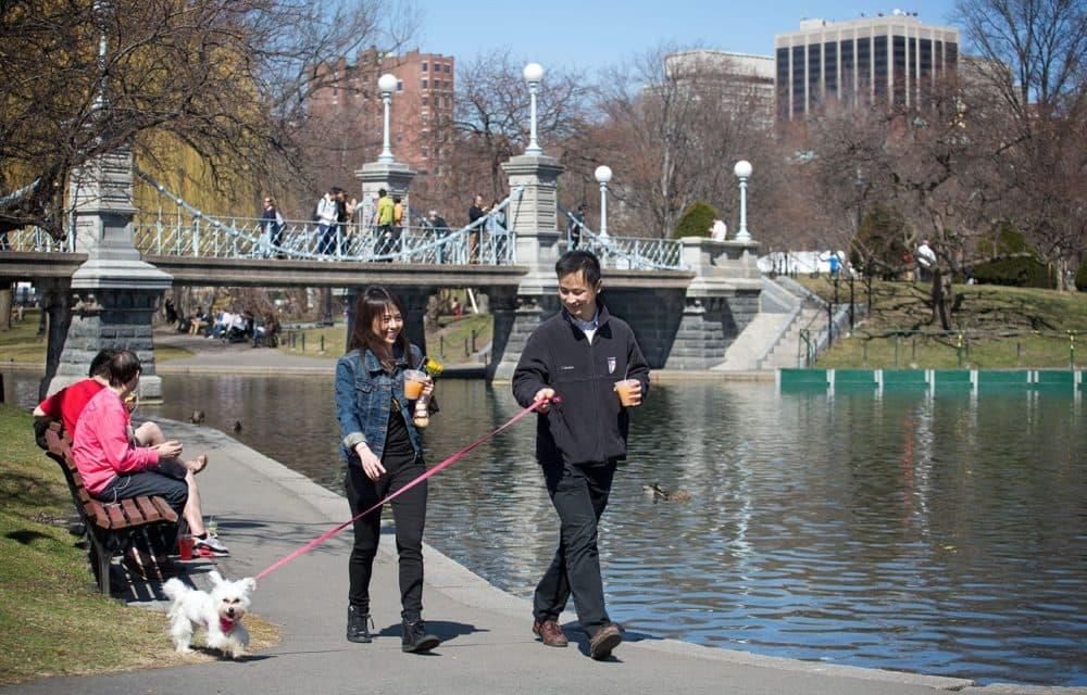 Paul Zeng, right, Will Sri and  Puffball take a sunny spring walk on Boston Common. (Robin Lubbock/WBUR)