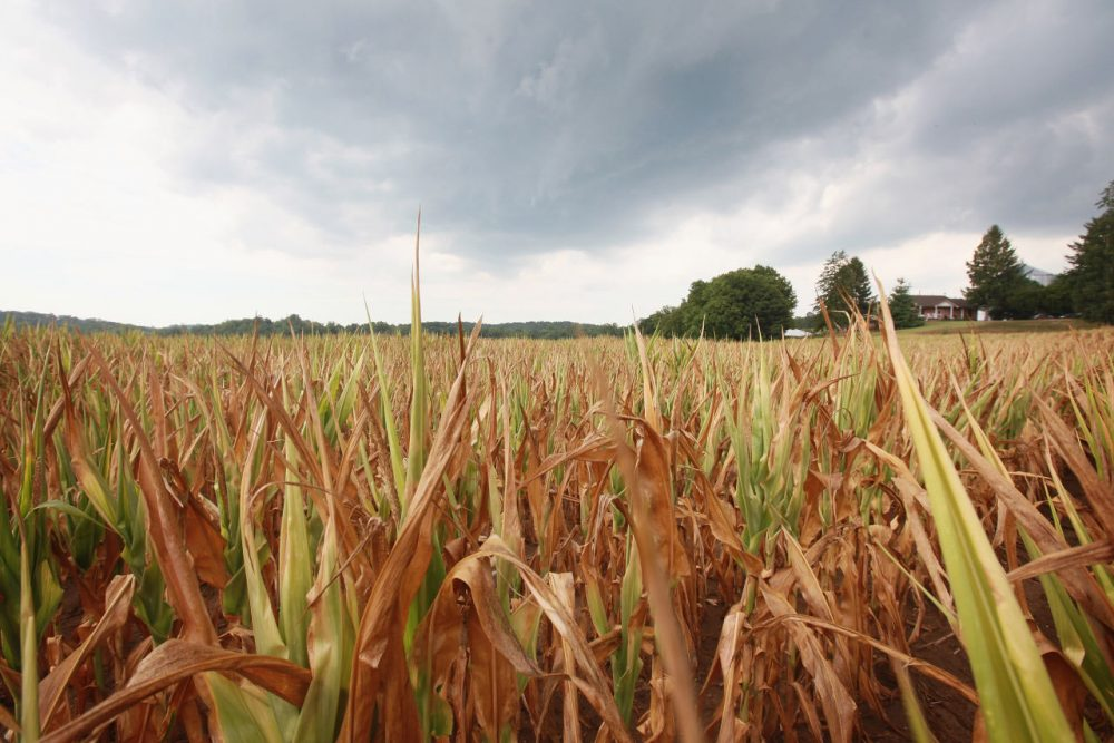 A new study finds young people (age 10 to 24) in rural areas have higher suicide rates than their urban counterparts. (Scott Olson/Getty Images)