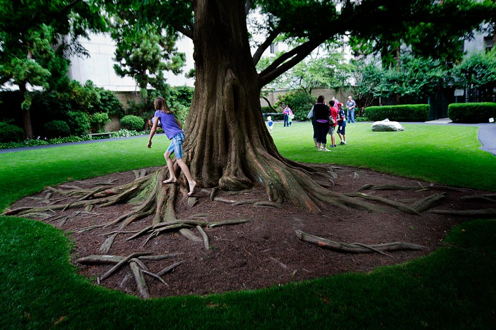 The Prouty Garden has won national acclaim. It has fountains, pine trees and birches, and a 65-foot dawn redwood tree, pictured here. (Jesse Costa/WBUR)
