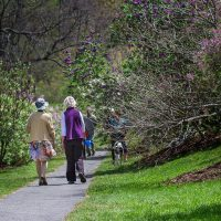 Two women walking down a path lined with lilac bushes at the Arnold Arboretum. (Jesse Costa/WBUR)