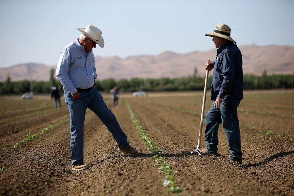 Farmer Joe Del Bosque (left) talks with a worker on April 23, 2015, in Firebaugh, California. ( Justin Sullivan/Getty Images)
