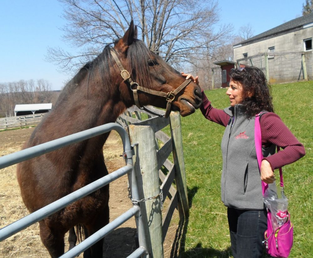 Horse racing writer Teresa Genaro arranged for Tie Break to retire in 2011 after his trainer could no longer afford to keep him. The 14-year-old lives at Akindale Thoroughbred Rescue in Pawling, N.Y. (Courtesy Teresa Genaro)