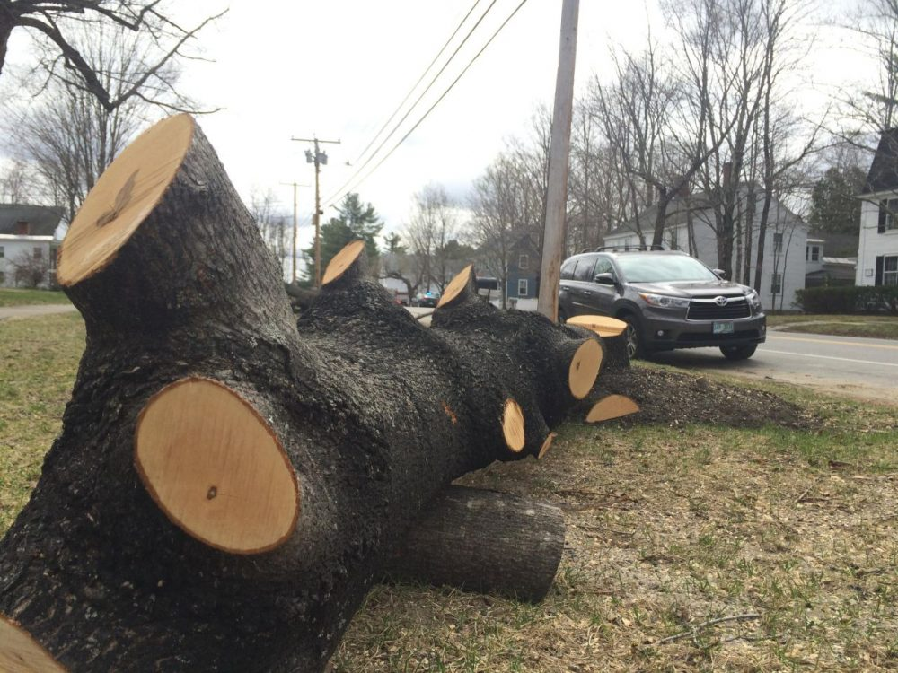 In Hopkinton, New Hampshire, more than a dozen trees that had grown up too close to power lines had to be removed. (Sam Evans-Brown/NHPR)