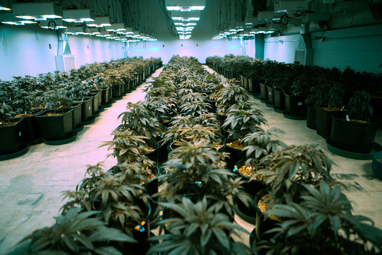 A Warehouse Full Of Legal Weed Medical Marijuana Takes
