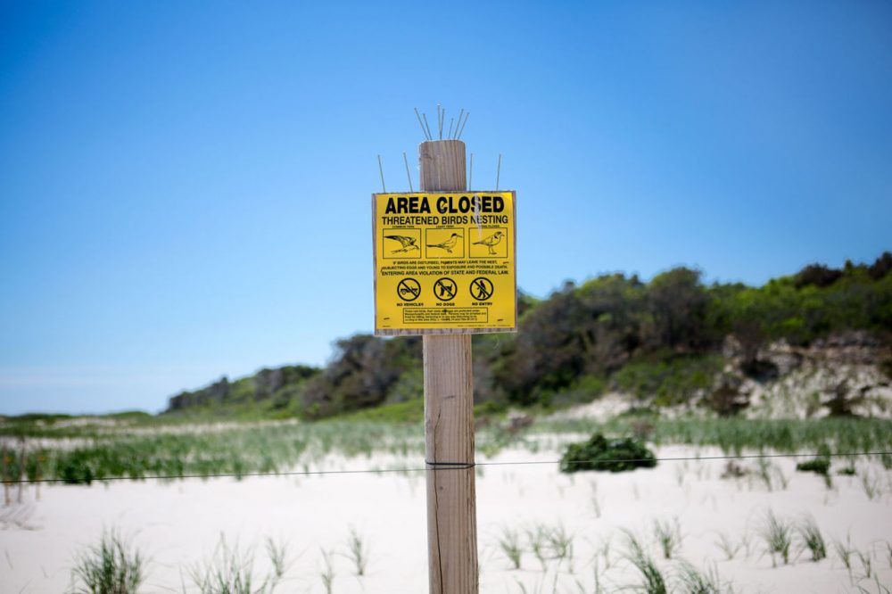 One of many signs town officials placed along Nauset Beach to inform visitors of the presence of nesting plovers, a federally protected species. (Jesse Costa/WBUR)