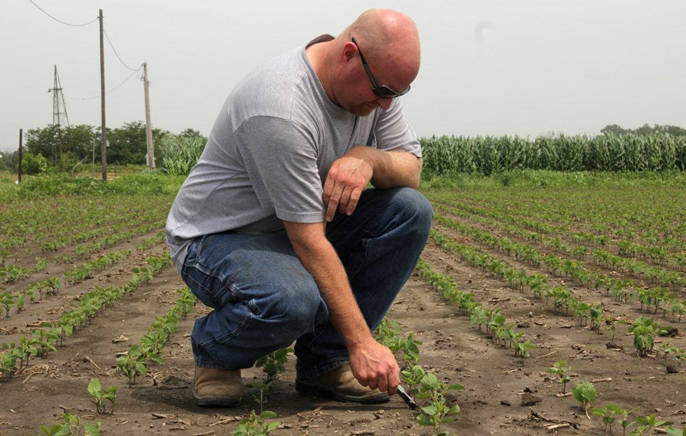 By the end of June, Matt Plenge's Kahoka, Missouri, farm had received close to four times its normal rainfall. (Abby Wendle/Harvest Public Media)