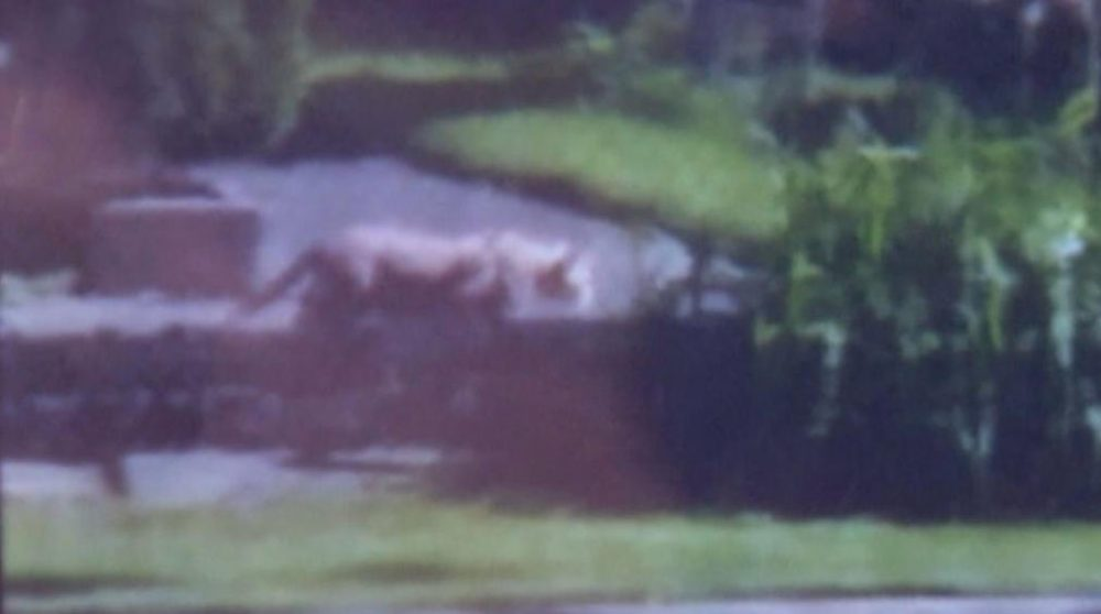 The mystery animal roaming Milwaukee can be seen in this screenshot from a grainy cell phone video. (Screenshot via WUWM)