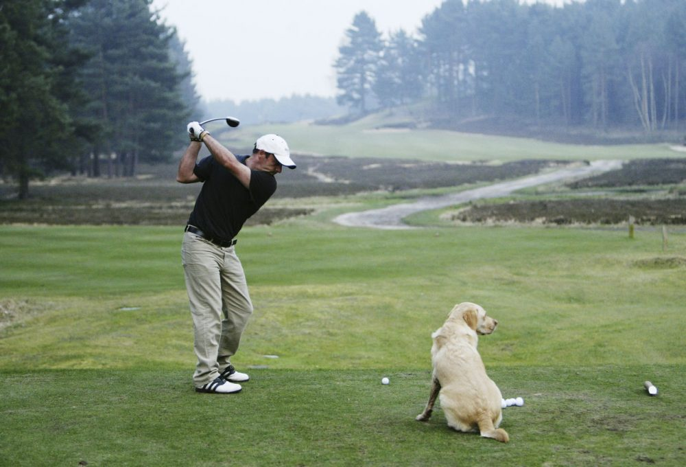 Dogs are welcome at the Sunningdale Golf Club and even help find lost golf balls. (Andrew Redington/Getty Images)