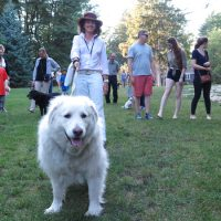 Dogs and their owners enjoy a group walking tour put on the by deCordova Sculpture Park and Museum. (Andrea Shea/WBUR)