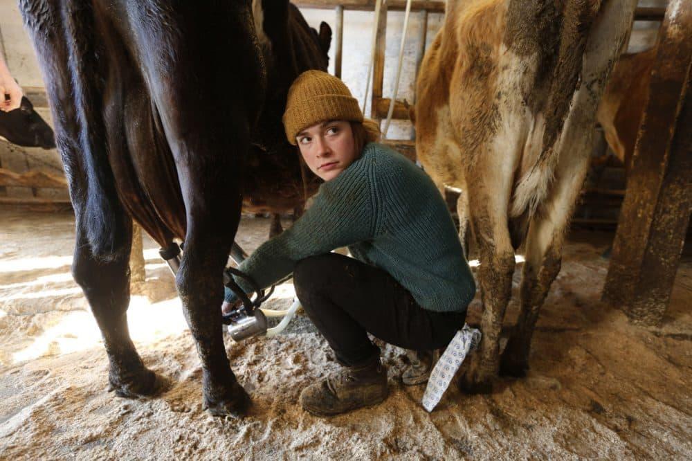 Jade Ouimette, 21, milks cows at the Straw Farm in Newcastle, Maine. (Robert F. Bukaty/AP)
