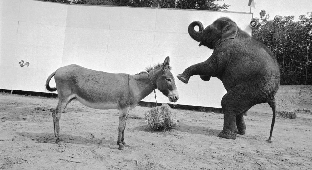 Janna Malamud Smith attempts to pop the political filter bubble with mixed results. In this photo, Dolly the elephant squares off against Dottie the donkey. The scene took place in Lake George, New York, Aug. 24, 1972. (Bob Schutz/AP)