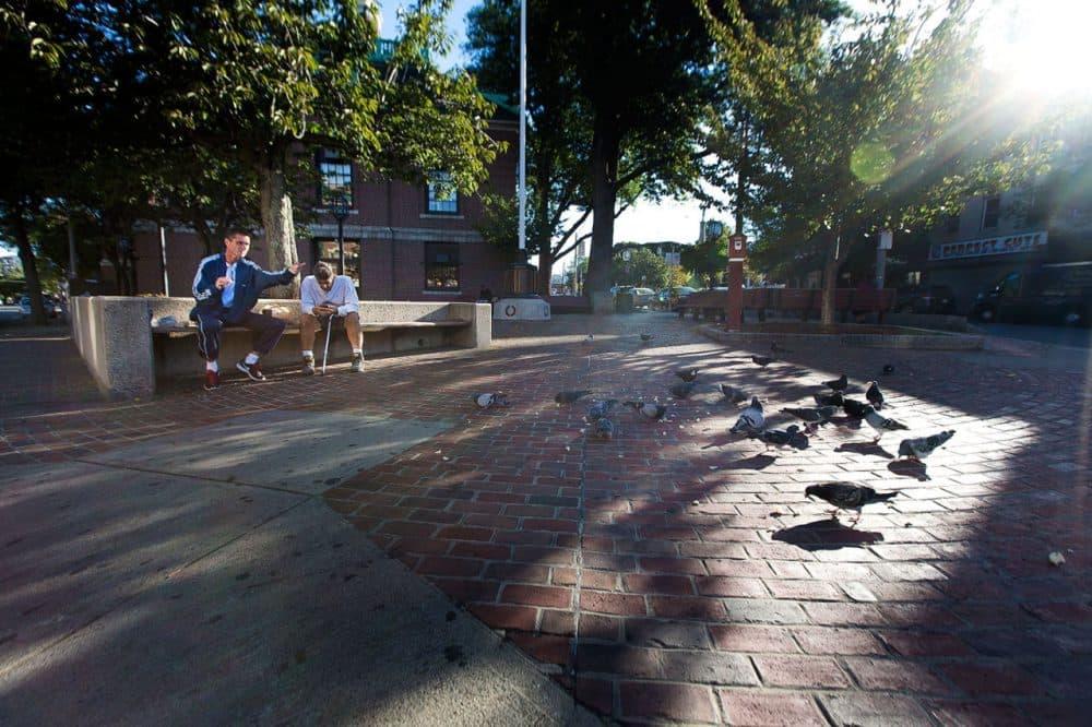 Joey feeding the birds in the morning in Bellingham Square. (Jesse Costa/WBUR)