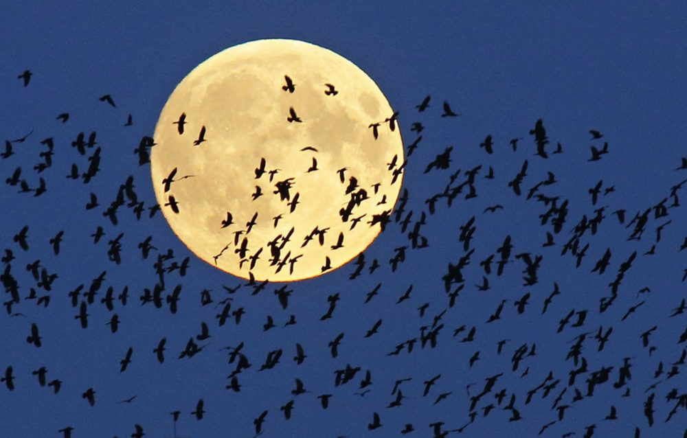 A flock of birds fly by as the super moon rises in Mir, Belarus. (Sergei Grits/AP)