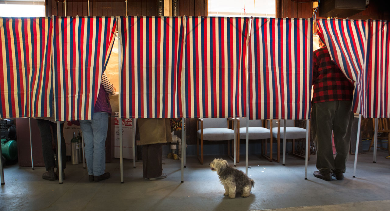 Phoebe the dog watches voters in Cambridge cast their votes in 2014. (Jesse Costa/WBUR)