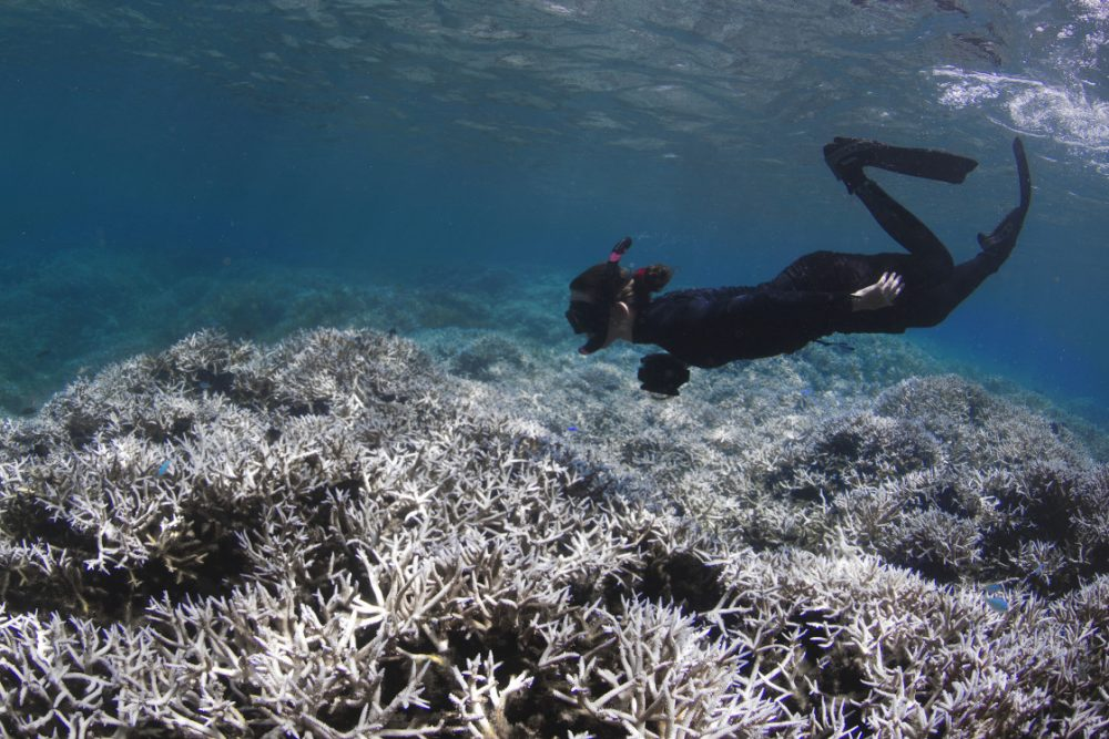 Alice Lawrence, a marine biologist, assesses the bleaching at Airport Reef in American Samoa in February 2015. (XL Catlin Seaview Survey)