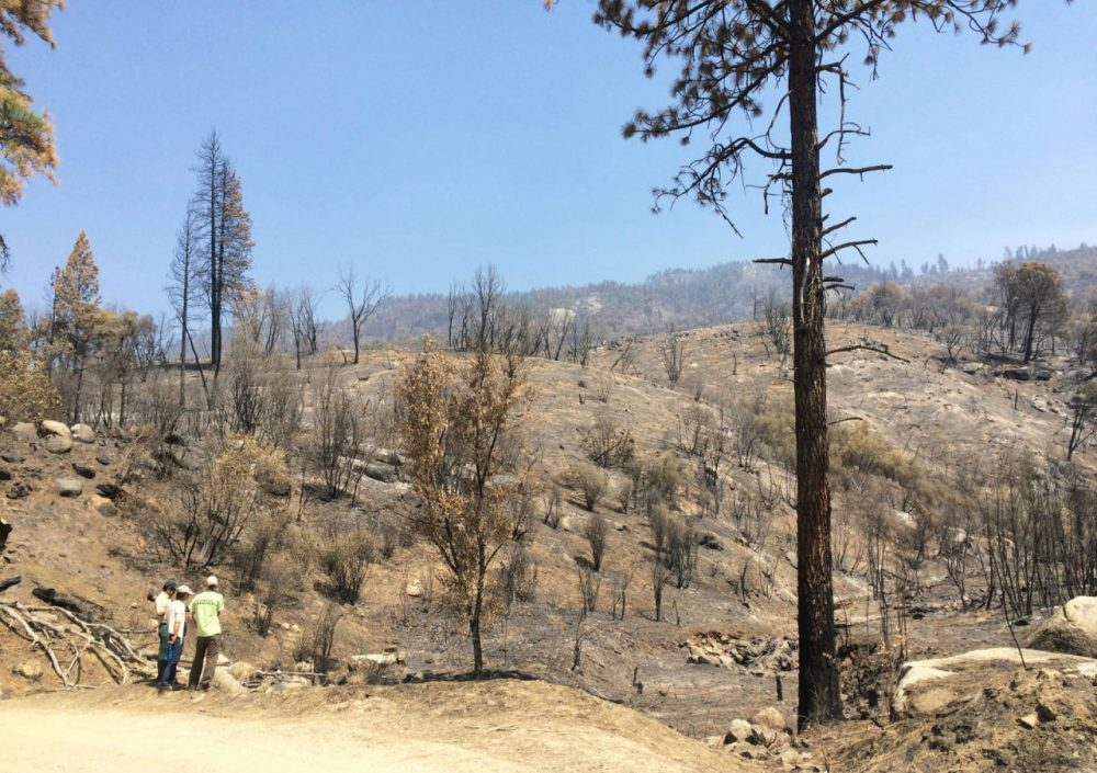 Fire has left large swaths of charred of forest in the Sierra Nevada. (Ezra David Romero/Valley Public Radio)