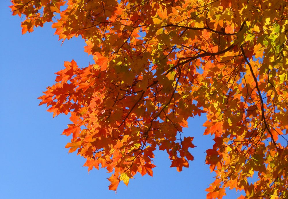 Fall foliage is pictured in Amherst, Massachusetts. (David Heyes/Flickr)