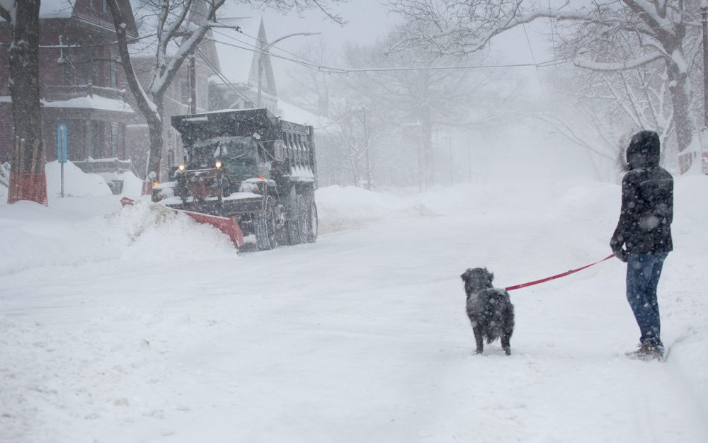 Sarah Matthews and her dog Paddington watch a snow plow on Huron Avenue in Cambridge during one of February 2015's many snowstorms. (Robin Lubbock/WBUR)