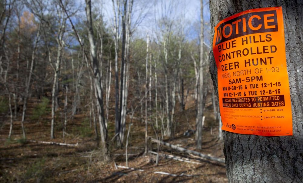 Signs posted on trees in the Blue Hills Reservation show the dates when only permitted hunters can enter the area. (Robin Lubbock/WBUR)