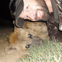 Willi is the young male hyena who treated Marcus Baynes-Rock like a friend. (Marcus Baynes-Rock)