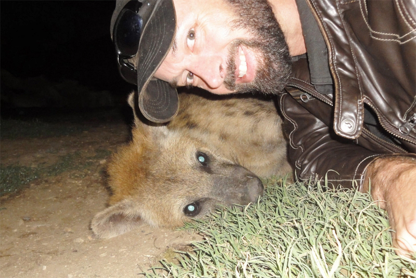 hyena hyenas friends friend