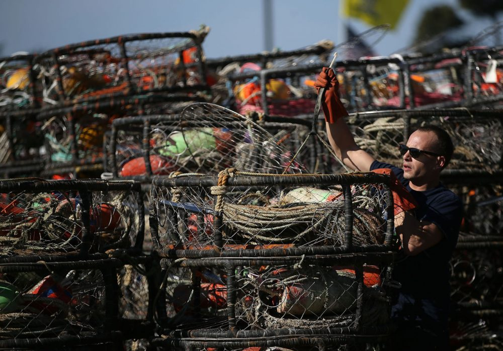 Chris Swim repairs crab traps in the parking lot of the Pillar Point Harbor on November 5, 2015 in Half Moon Bay, California, after the California Fish and Game Commission voted to suspend recreational Dungeness crab fishing for 180 days due to the a high level of the deadly neurotoxin domoic acid that has been found in the meat and viscera of Dungeness crabs caught off the coast of San Francisco.  ( Justin Sullivan/Getty Images)