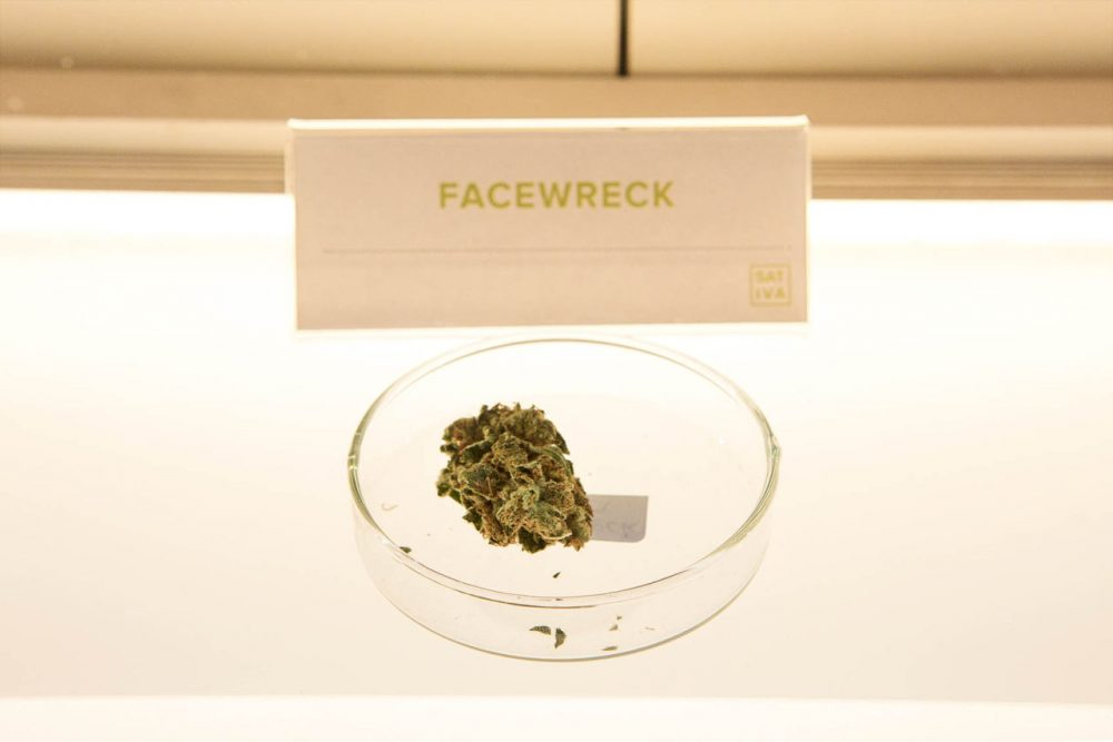 A sample of Facewreck marijuana flower in a display cabinet in the retail area of New England Treatment Access. (Jesse Costa/WBUR)