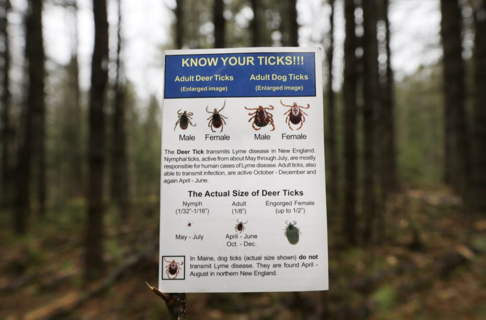 In this 2014 file photo, an informational card about ticks distributed by the Maine Medical Center Research Institute is seen in the woods in Freeport, Maine. (Robert F. Bukaty/AP)
