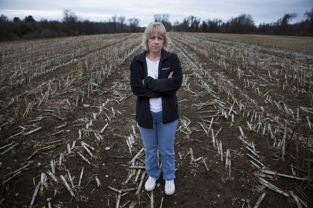 Desiree Moninski stands in the middle of a corn field on the land the Islamic Society of Greater Worcester wants to turn into a cemetery. She lives in the farmhouse across Corbin Road and wishes the land would remain a farm. (Jesse Costa/WBUR)