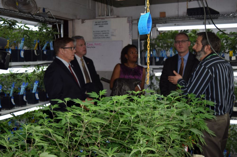 In January, Sens. Richard Ross (R-Wrentham), John Keenan (D-Quincy), Linda Dorcena Forry (D-Dorchester) and Jason Lewis (D-Winchester) listen as Jim Elftmann, chief operating officer of River Rock Cannabis, explains how marijuana plants are grown inside the Denver dispensary. (Steve Brown/WBUR)