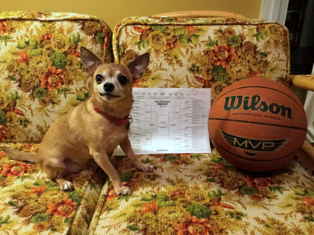 Wilson the dog poses with her bracket. (Laura Ellis/Only A Game)