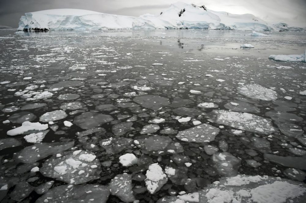 Ice floats on the surface of the sea in the western Antarctic peninsula, on March 05, 2016.  Waddling over the rocks, legions of penguins hurl themselves into the icy waters of Antarctica, foraging to feed their young. Like seals and whales, they eat krill, an inch-long shrimp-like crustacean that forms the basis of the Southern Ocean food chain. But penguin-watchers say the krill are getting scarcer in the western Antarctic peninsula, under threat from climate change and fishing.   AFP PHOTO/EITAN ABRAMOVICH / AFP / EITAN ABRAMOVICH        (Photo credit should read EITAN ABRAMOVICH/AFP/Getty Images)