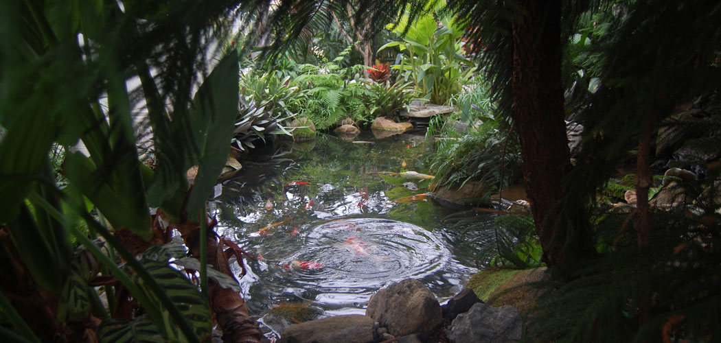 Fish pond in the Botanical Center at Roger Williams Park in Providence. (Greg Cook)