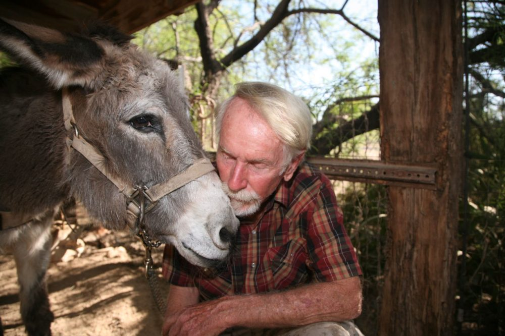 Tom Taylor and Hualapai are kind of stars of Arizona's Adopt-a-Burro Program. Since Taylor adopted her in 1989, the pair have hiked almost daily, even down the Grand Canyon. (Stina Sieg/KJZZ)