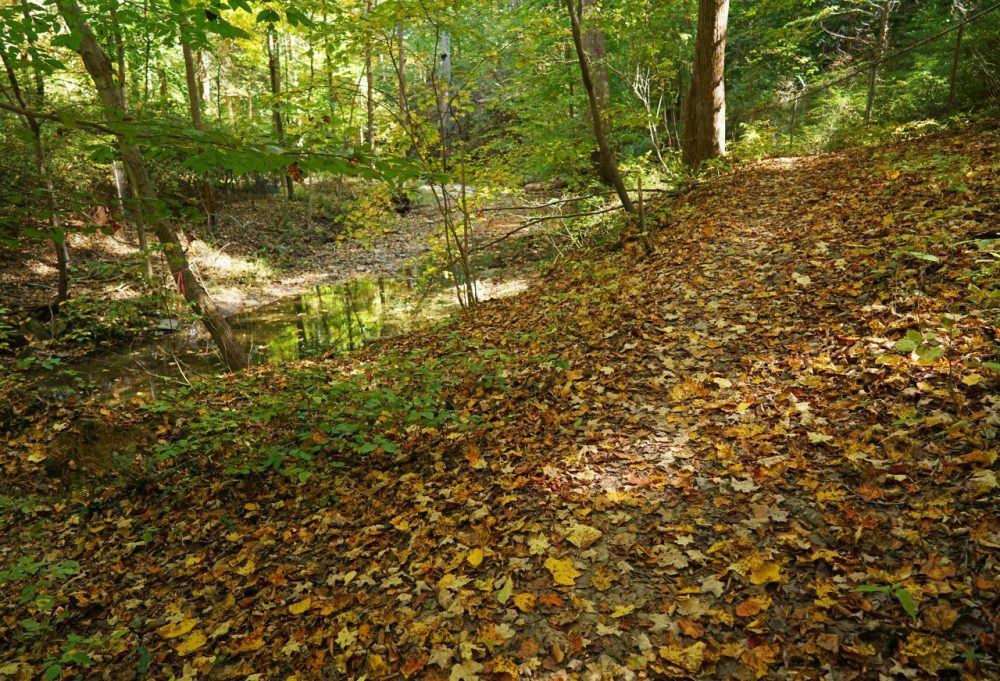Autumn leaves are scattered on a trail near Rock Creek Park in Washington, DC on October 16, 2015. (MANDEL NGAN/AFP/Getty Images)
