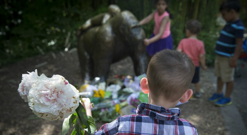 A boy brings flowers to put beside a statue of a gorilla at the Cincinnati Zoo & Botanical Garden, Monday, May 30, 2016. A gorilla named Harambe was killed by a special zoo response team on Saturday after a 3-year-old boy slipped into an exhibit and it was concluded his life was in danger. (John Minchillo/AP)