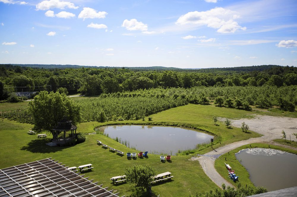 The Nashoba Valley Winery's apple orchard. (Jesse Costa/WBUR)