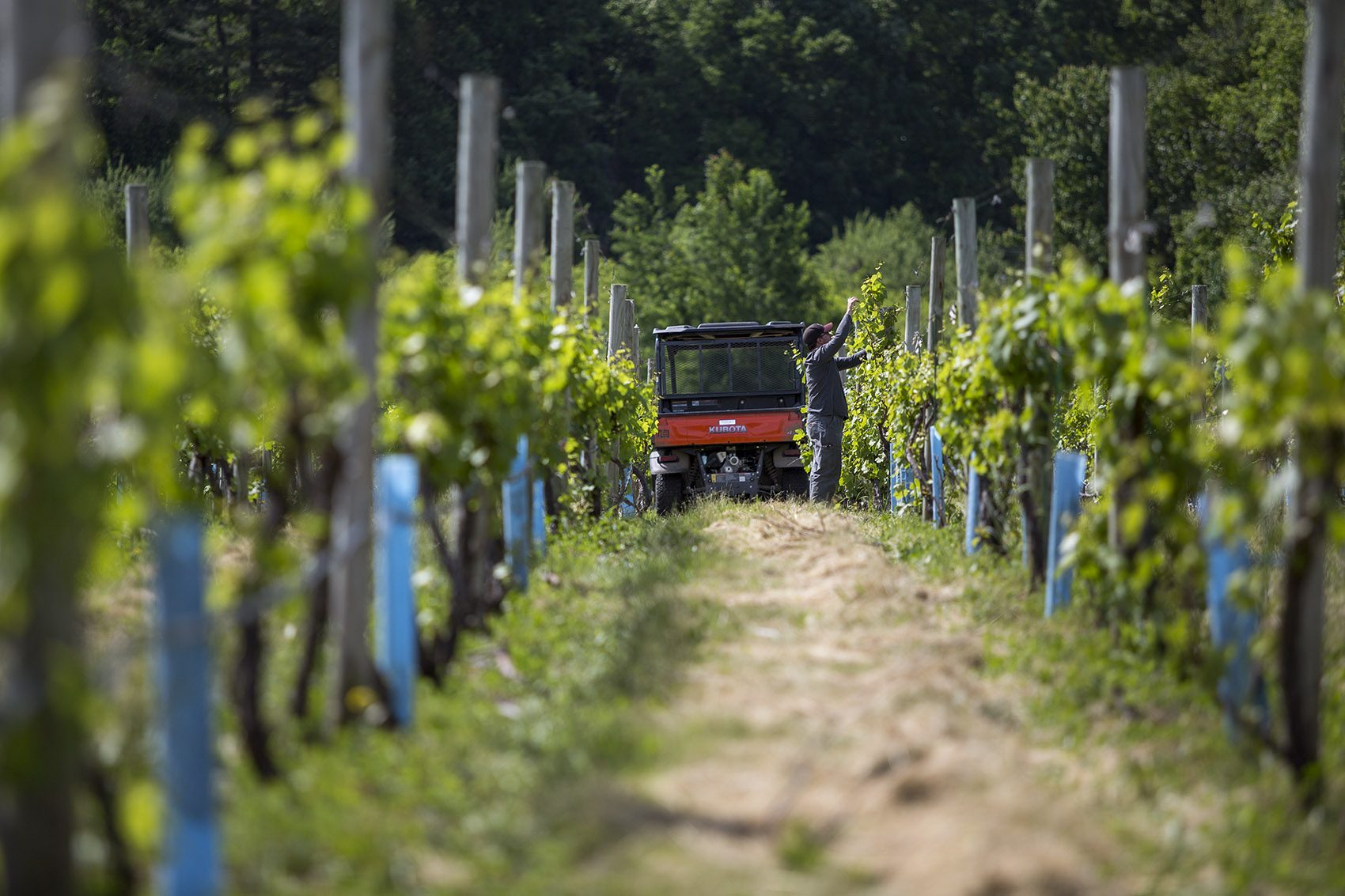 Mass Winery Owner Says Reinterpreted Regulations Might Put Him