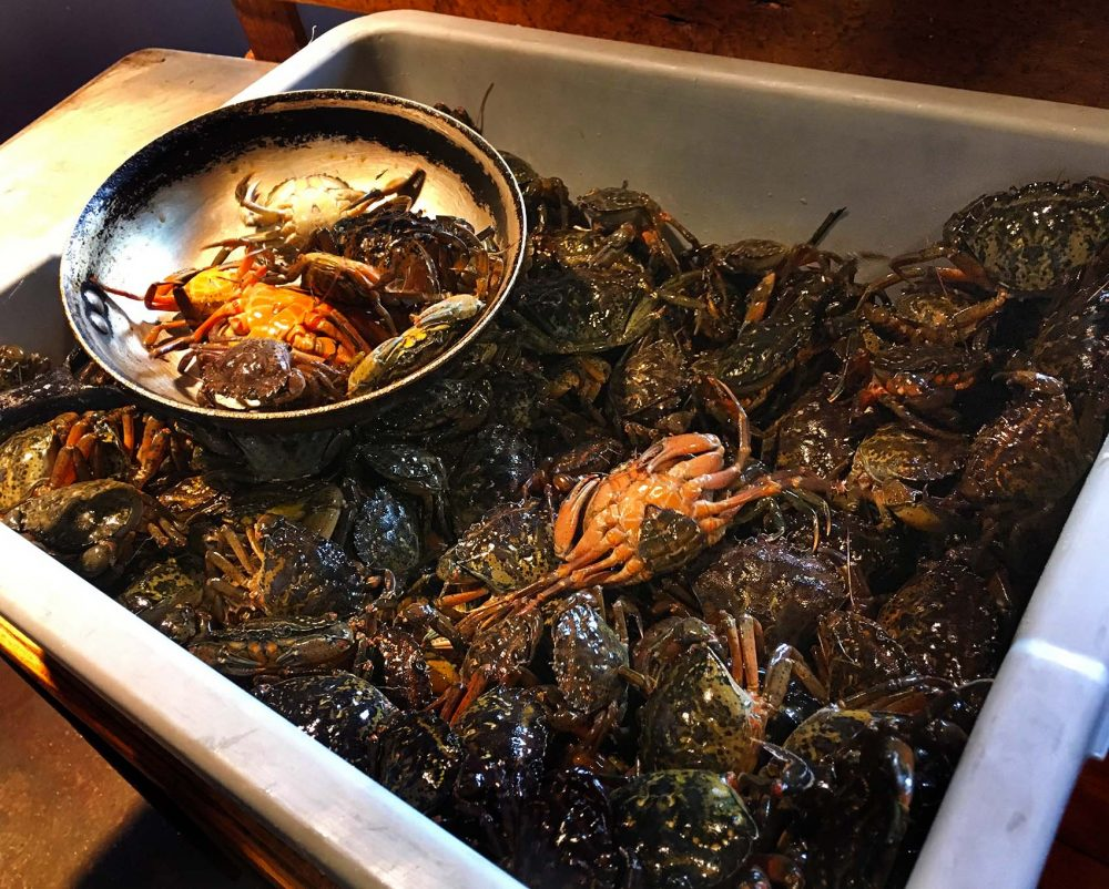 Invasive green crabs have been destroying clam and scallop populations from South Carolina to Maine, but now some chefs are trying to put them on their menus. (Courtesy Emily Corwin/New Hampshire Public Radio)