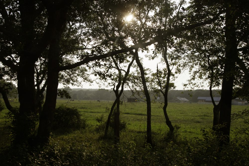 A field in Chilmark, on Martha's Vineyard, is seen on Aug. 18, 2011.  (Carolyn Kaster/AP)