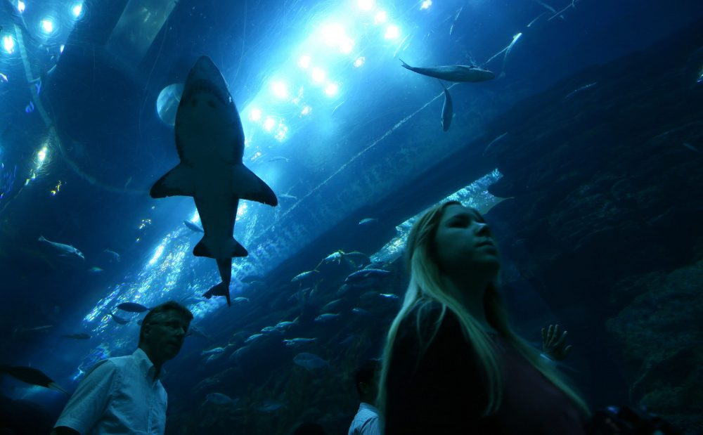 Tourists look at sharks in a viewing tunnel at the aquarium at the Dubai Mall on June 1, 2016 in the Gulf emirate of Dubai. (Marwan Naamani/AFP/Getty Images)