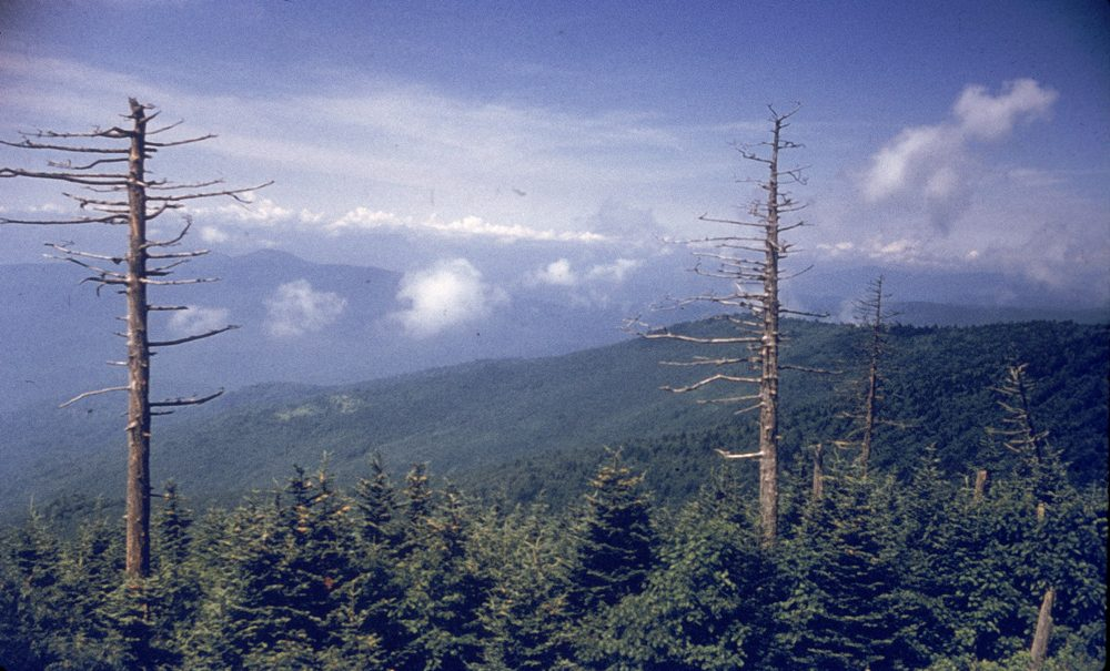View from Clingman's Dome in the Great Smoky Mountains, Tennessee, circa 1960. (Hulton Archive/Getty Images)