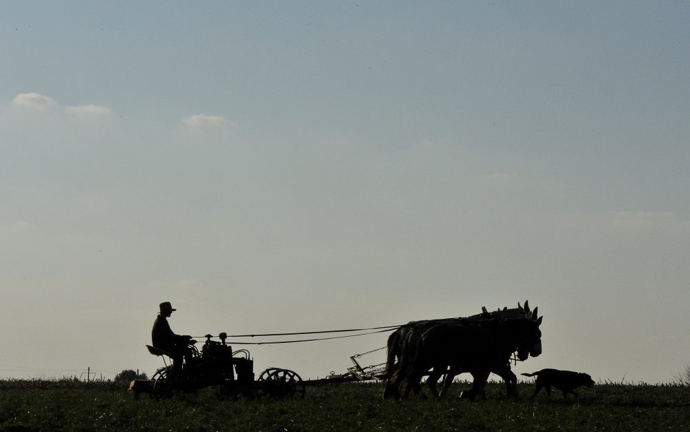 An Amish farmer works on his field near Paradise, PA, November 01, 2011. (Mladen Antonov/AFP/Getty Images)